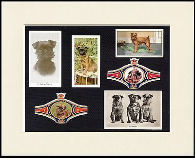 Brussels Griffon Mounted Dog Collectable Cigarette Trade Cards And Bands