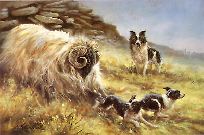 BORDER COLLIE WORKING SHEEPDOG LIMITED EDITION PRINT - by the Late Mick Cawston