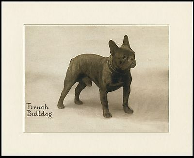 French Bulldog Standing Dog Great Image  Vintage Style Print Ready Mounted