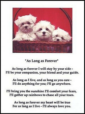 """Beautiful MALTESE print """"AS LONG AS FOREVER.."""" art poem dog puppy NEW!"""