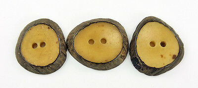 Vintage Buttons Natural Vegetable Ivory Set 3 Slices with Bark Intact Sew-Thru