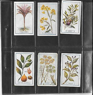 Gallaher - Plants Of Commercial Value  - 1917 - 6 Cards