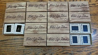 Vintage 2 X 2 Color Projector Slides By Wildlife Films Of Hollywood California