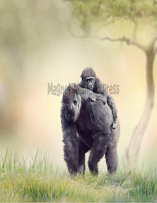 METAL REFRIGERATOR MAGNET Female Gorilla With Baby On Back Primate Ape