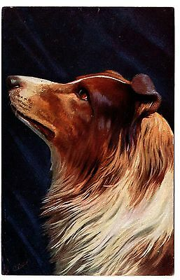 Rough Collie  Head Study Old Tucks Dog Art Postcard From 1908
