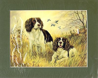 """8"""" x  10"""" MOUNTED  OIL PAINTING PRINT of TWO SPRINGER SPANIELS  DOG"""