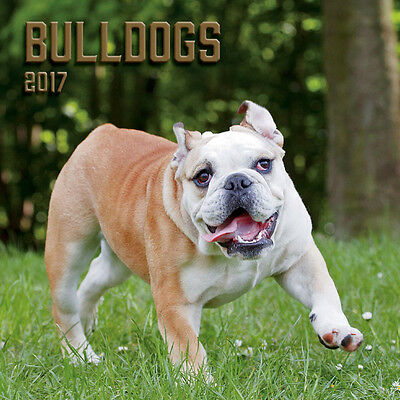 "Bulldogs 2017 Wall Calendar by Turner/Lang (12"" x 24"" when opened)"
