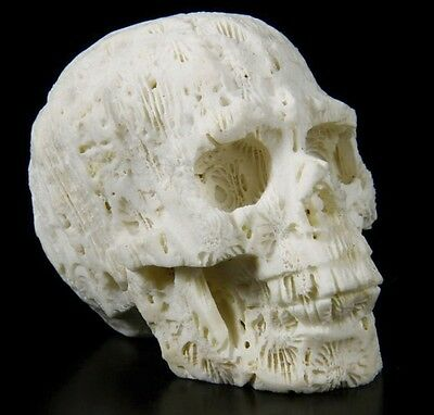 WHITE CORAL Carved Crystal Skull/Head Healing,Crystal Healing #S055