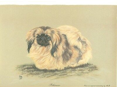 """8"""" X 10"""" OPEN EDITION PASTEL DRAWING  PRINT  of the  PEKINGNESE  by M. A.B. DOG"""