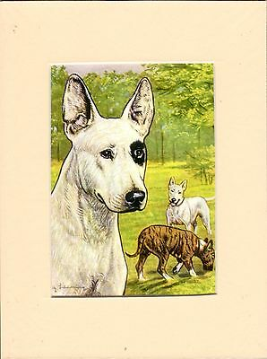 """MOUNTED 8"""" x  6""""  OIL PANTING PRINT of a OLD( 1930s  ENGLISH BULL TERRIER   DOG"""