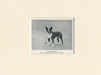 Boston Terrier Original Vintage 1950 Named Dog Print Mounted Ready To Frame