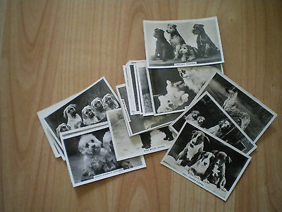 Collection Of Senior Service Cigarette Cards - Dogs