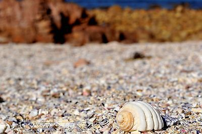 Shells at the Beach Australian Landscape Photographic Print 12 x 18""
