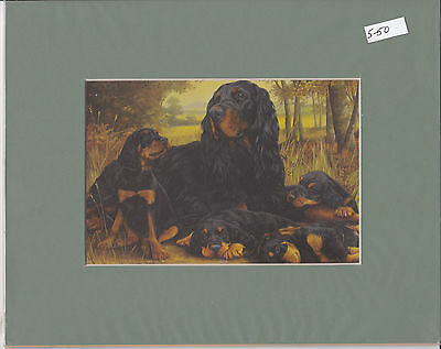 """MOUNTED 8"""" x 6"""" OIL PAINTING OF  A  GORDON SETTER FAMILY"""