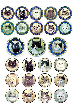 Cat Plate Decorative Gilded 17cm Plate 12 Different Cat Breeds Hand Decorated UK