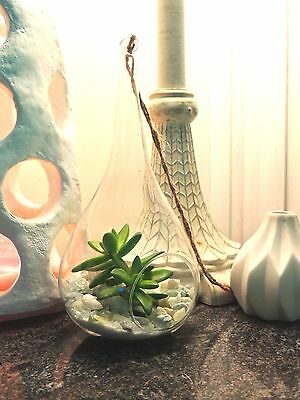 Glass Teardrop Terrarium With REAL Plants Succulent Garden Home Decor Gift
