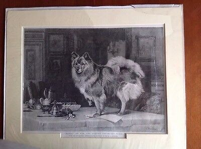 c1893 Print from Engraving by C. Burton Barber. 'Marco' on HM Queen's Table.