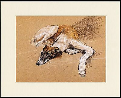 Greyhound At Rest Lovely Dog Print Mounted Ready To Frame
