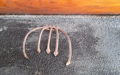 Vintage  CULTIVATOR    5 Tine   Head  Garden Tool Made in USA