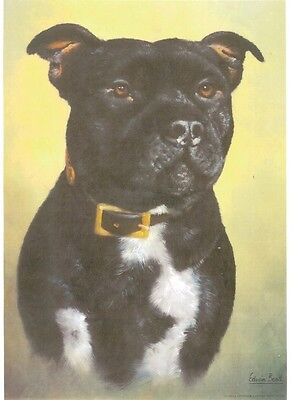 """17"""" X 12"""" SIGNED LIMITED EDITION PRINT of a  STAFFORDSHIRE BULL TERRIER   DOG"""