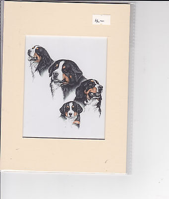 "8"" x  6"" MOUNTED OIL PAINTING PRINT of  BERNESE MOUNTAIN DOG STUDY"