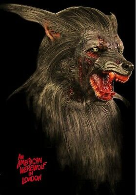 life size bust american werewolf in london. & acrylic eyes......HUGE bust