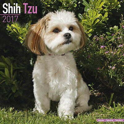 "Shih Tzu 2017 Wall Calendar by Avonside (12"" x 24"" when opened)"