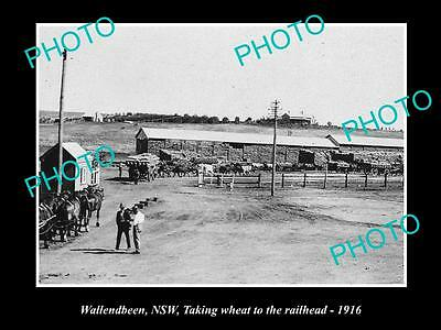 Old Large Historical Photo Of Wallendbeen Nsw, Taking Wheat To The Railhead 1916