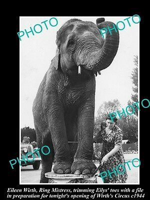OLD LARGE HISTORIC PHOTO OF WIRTHS CIRCUS ELEPHANT GETTING A TOE FILE, c1944