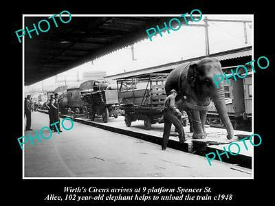 Old Large Historic Photo Of Wirths Circus In Melbourne 1948, Alice The Elephant