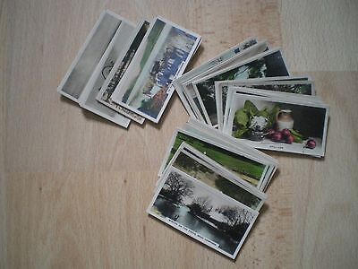 Collection Of Cavanders Cigarette Cards - The Homeland Series