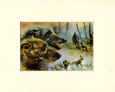 """MOUNTED  8"""" X 10"""" OIL PAINTING PRINT of  LURCHERS HUNTING   DOG"""