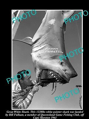 Old Large Historic Photo, Great White Shark Bring Caught In 1961, Game Fishing 1