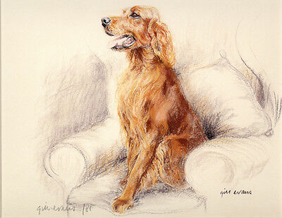 IRISH RED SETTER GUNDOG DOG LIMITED EDITION PRINT - Artists Proof # 14/85