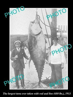 OLD LARGE HISTORICAL GAME FISHING PHOTO OF WORLD RECORD TUNA CATCH c1913