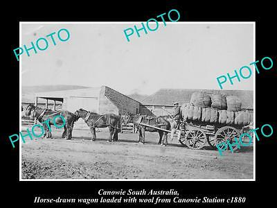 Old Large Historic Photo Of Canowie Sa, Wool Wagons Loaded From The Station 1880