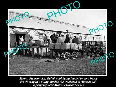 OLD HISTORIC PHOTO OF MOUNT PLEASANT SA, LOADING WOOL FROM SHEARING SHED c1910