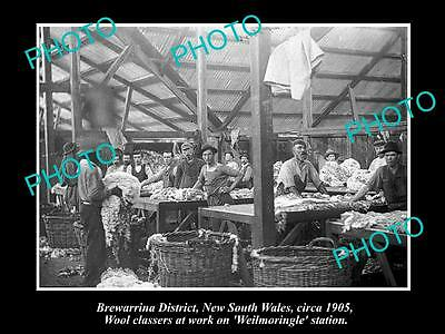 OLD LARGE HISTORIC PHOTO OF BREWARRINA NSW, WOOL CLASSERS AT WEILMORINGLE c1900