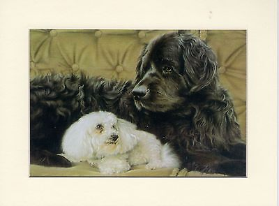 """8"""" X 10"""" MOUNTED OIL PAINTING PRINT of the NEWFOUNDLAND +WHITE POODLE   DOG"""