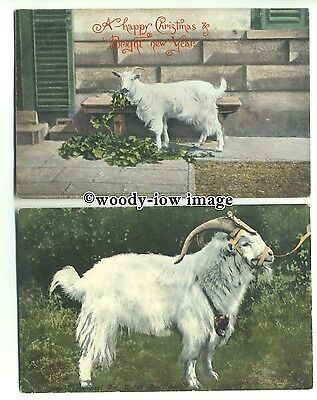 an0755 - Goat eating the Ivy, and a Handsome Stud Ram - postcards x 2
