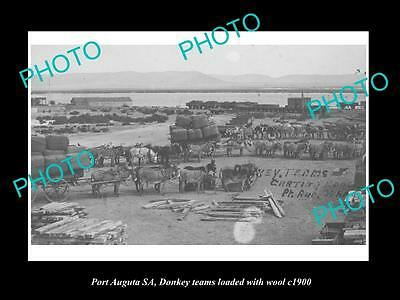 OLD LARGE HISTORIC PHOTO OF PORT AUGUSTA SA, DONKEY TEAMS LOADED WITH WOOL c1900