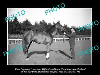 OLD LARGE HISTORIC PHOTO OF FAMOUS AUSTRALIAN RACE HORSE PHAR LAP IN NZ c1931 3