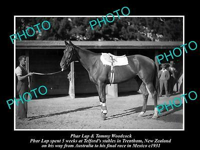 OLD LARGE HISTORIC PHOTO OF FAMOUS AUSTRALIAN RACE HORSE PHAR LAP IN NZ c1931 1