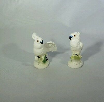 White Cockatoo Parrot Salt And Pepper See Pics
