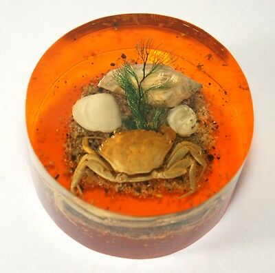 Vintage seaside crab shells paperweight ornament plastic perspex lucite resin ??
