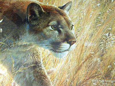 Predator's Walk by Carl Brender LIMITED EDITION Mountain Lion COUGAR Framed WSU