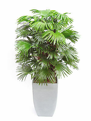3ft Artificial Fan Palm ~ Very realistic! ~ Perfect for any area of your home!