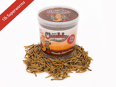 454g Tub Chubby Dried Superworms for Birds Reptiles Poultry Fish 1lbs