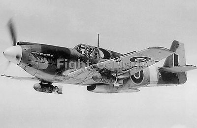 WW2 Picture Photo The only A-36A Apache aircraft of the RAF in flight 1653