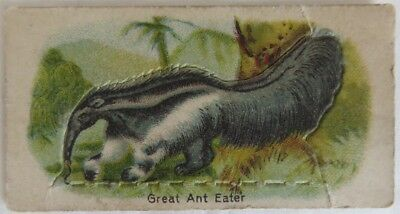 Vintage Animals Millbank Tobacco #15 Great Ant Eater Card          (Inv12961)